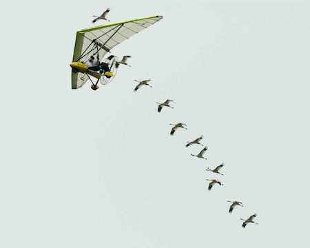 Operation migration flyover. Ramos Keith / US Fish and Wildlife Service
