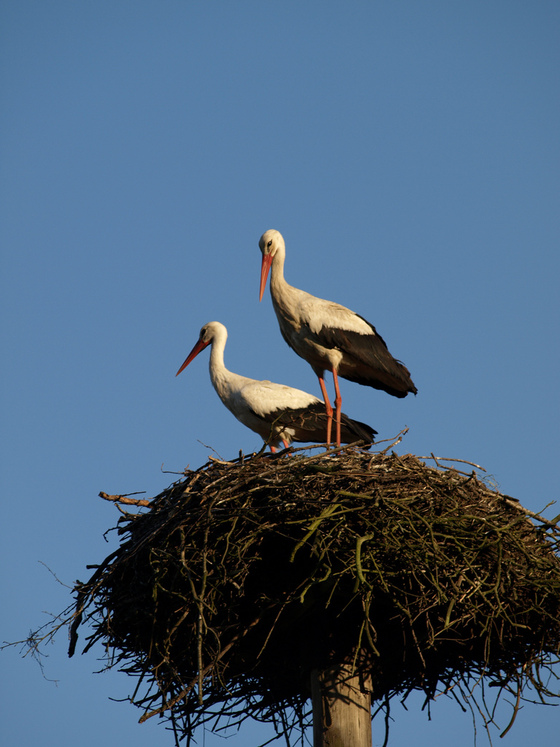 The stork's nest. Photograph by tomasz przechlewski / Flickr