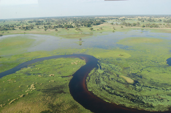 The Okavongo River Delta at the center of the Kalahari Desert. Photo by Joachim Huber / Wikimedia Commons