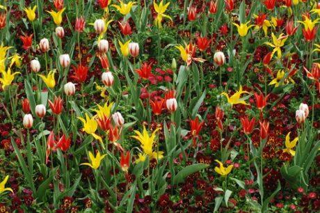 April flower