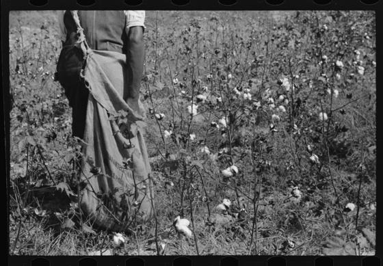<i>A black, female sharecropper</i> (1939). Wikimedia Commons