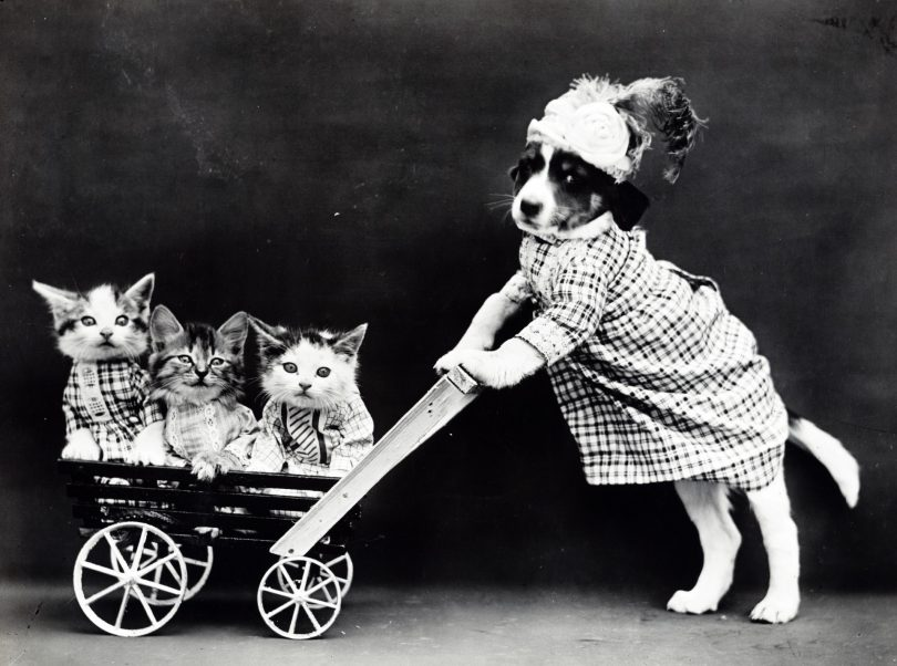 Dog pushing cart full of cats
