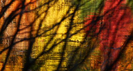 Walden Pond through trees