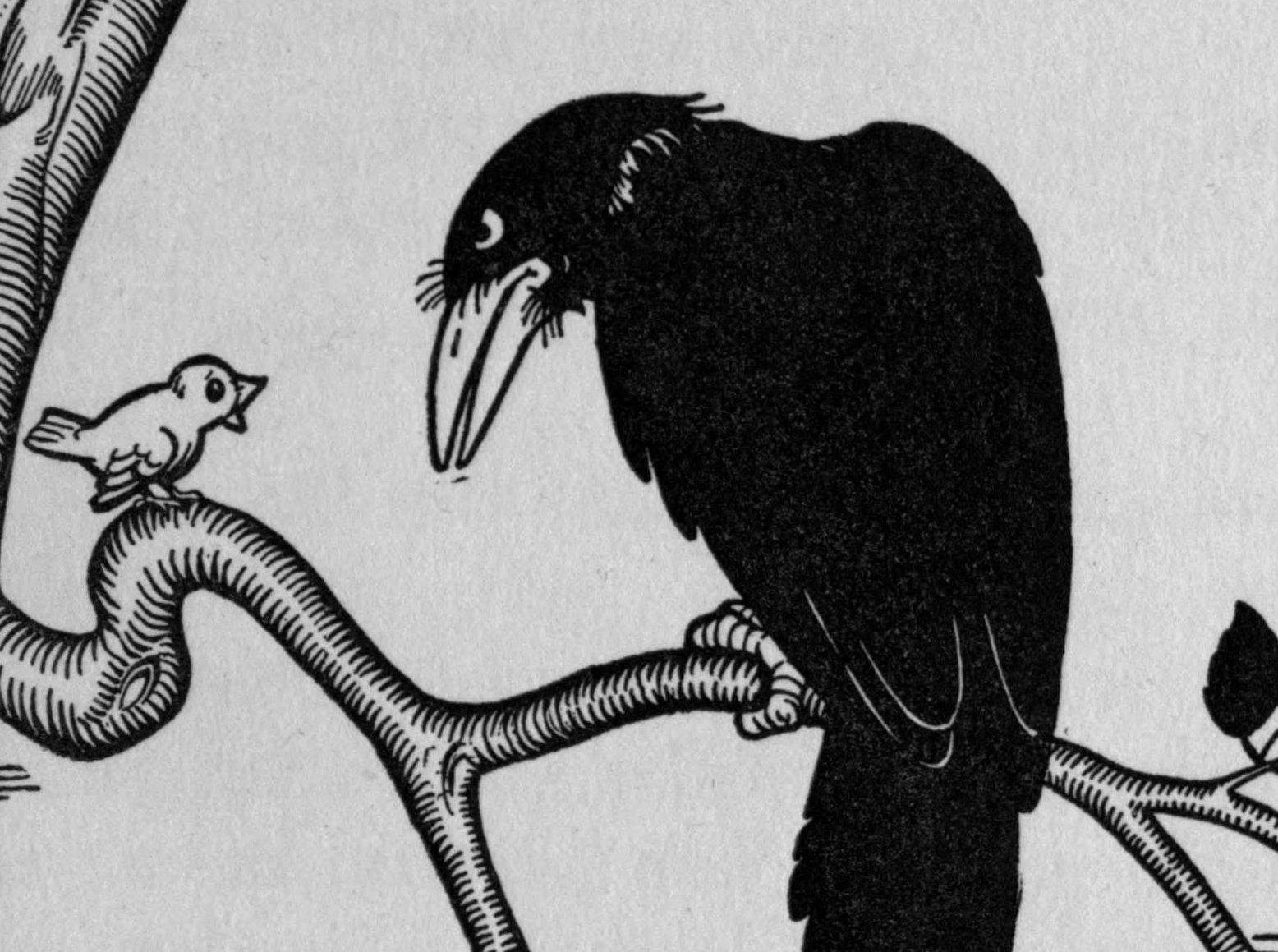Listen to the Birds | Public Books